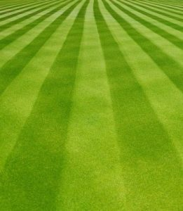 Lawn Striping Guelph Lawn Tips